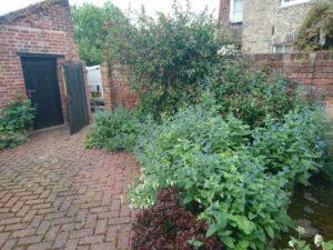 Kernos Garden 2